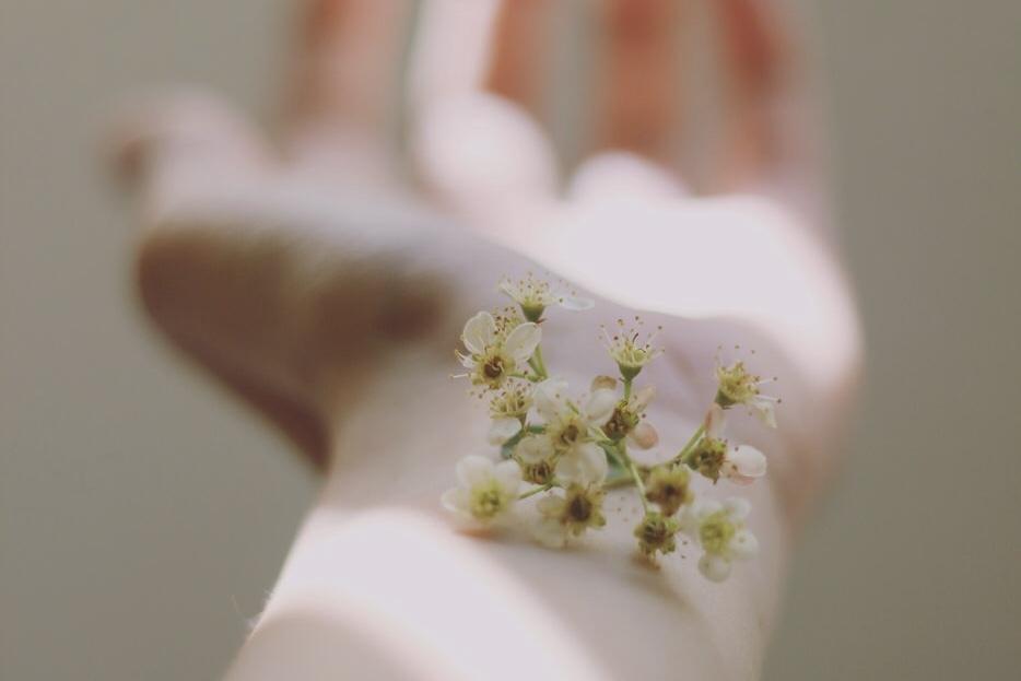 花と手の画像