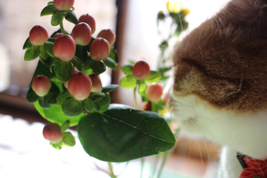 猫とお花の画像