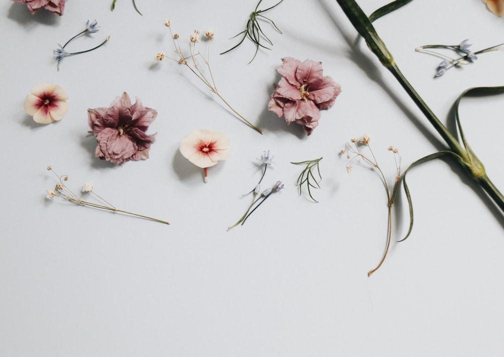 Bloomee LIFEから届いたお花をもっと楽しむ方法