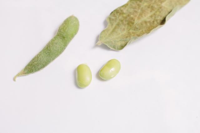 枝豆と大豆の効果を比較!